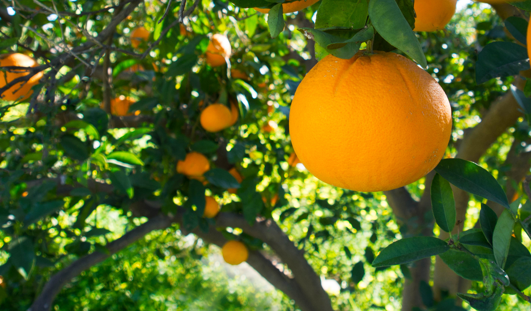 Come trapiantare un albero da frutto nel giardino - Alberi da piantare in giardino ...