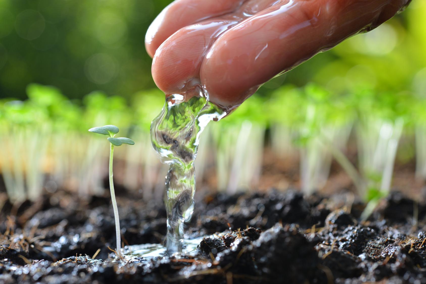 Annaffiare le piante come risparmiare acqua irrigando for Annaffiare le piante