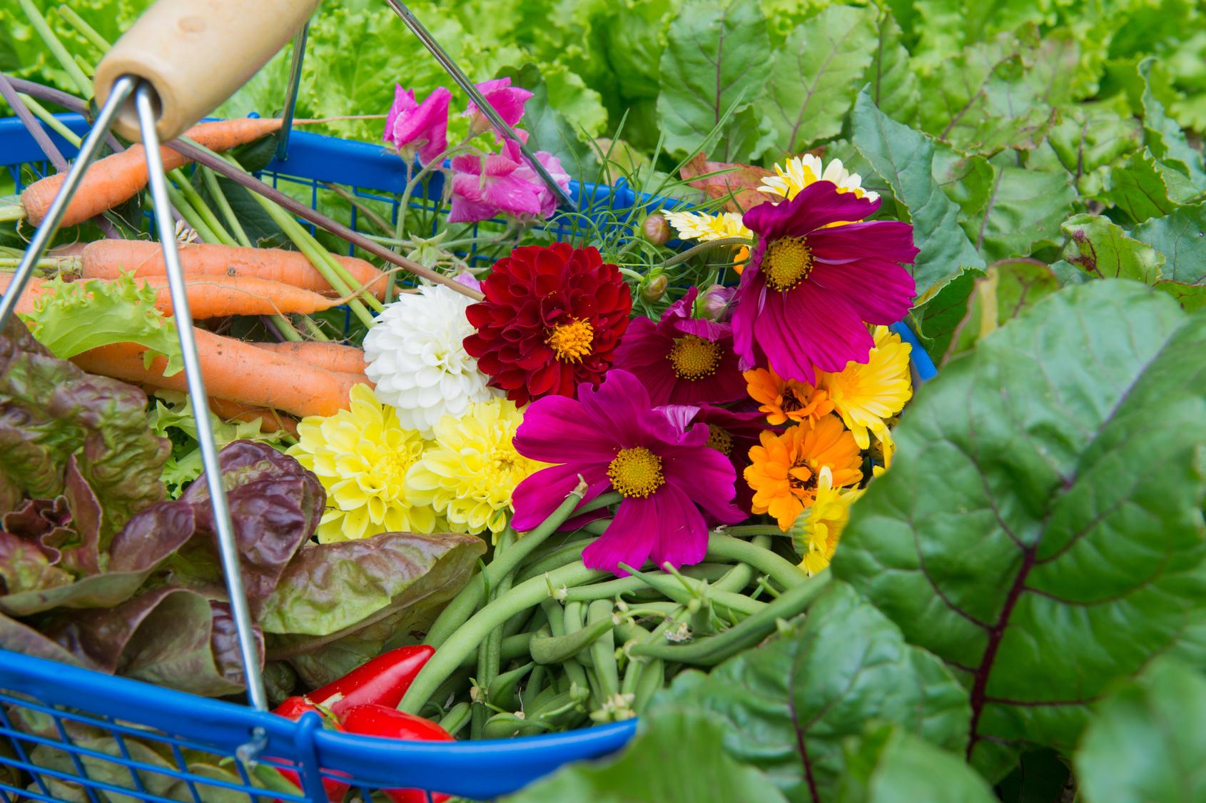 Fiori Da Piantare Nell Orto fiori nell'orto, belli e utili! ecco perché.