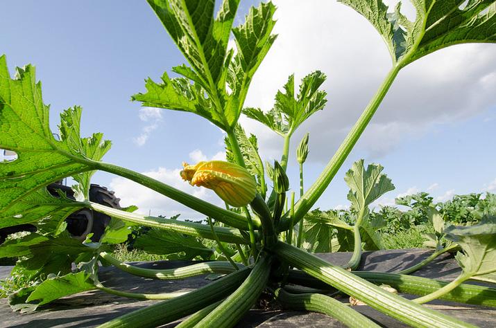 Annaffiare 5 regole da non scordare for Annaffiare le piante