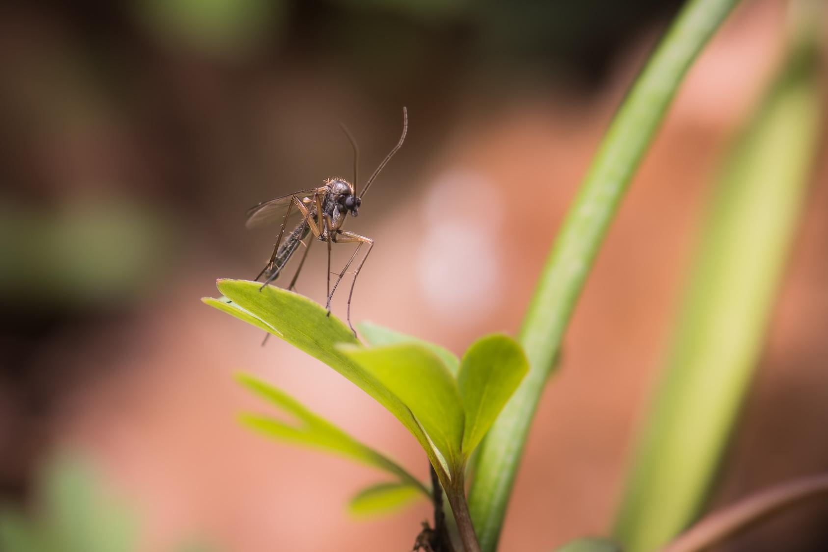 Repellente Naturale Per Vespe tutti i rimedi naturali per allontanare gli insetti in estate