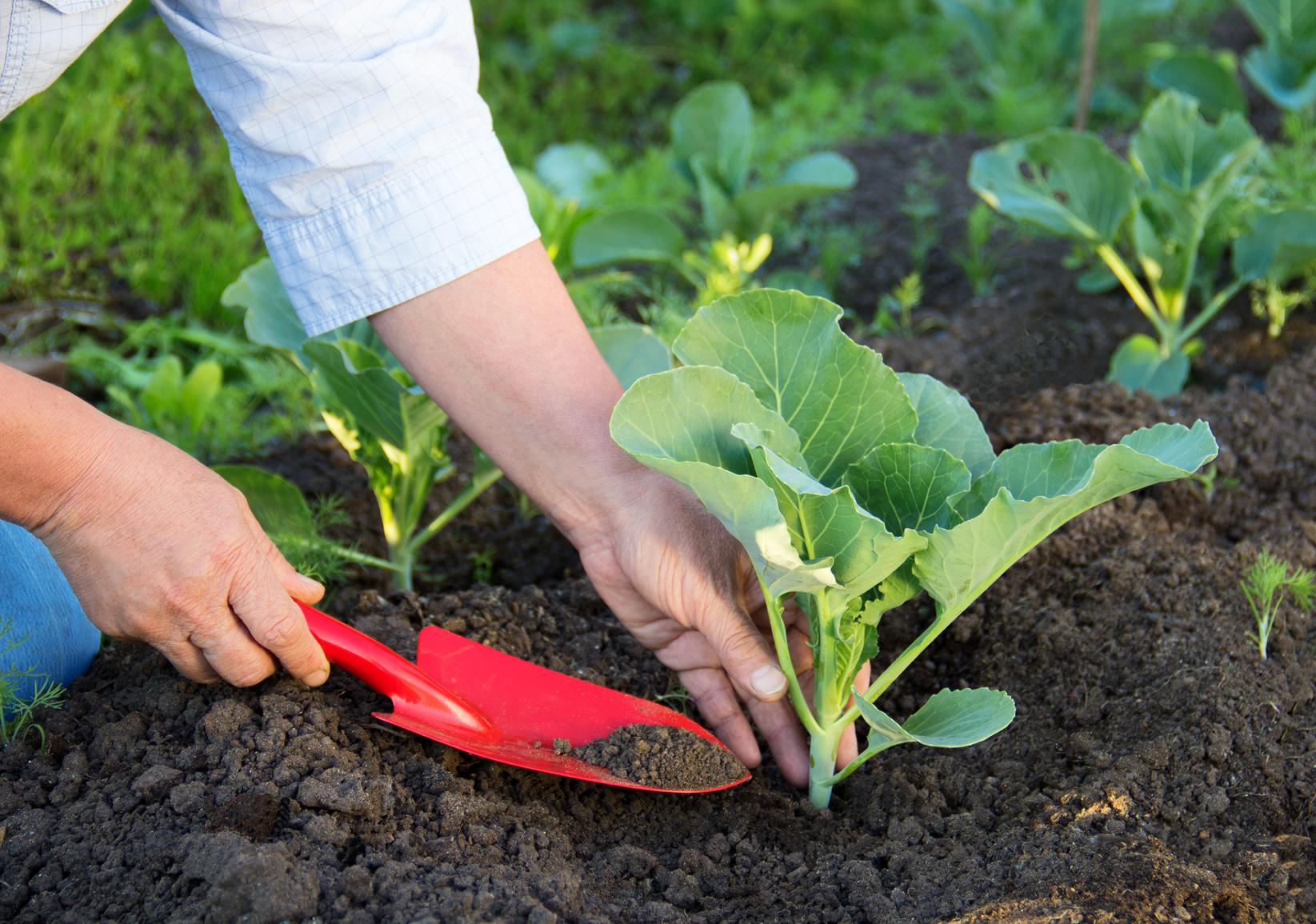 Orto in estate cosa piantare for Cosa piantare nell orto adesso
