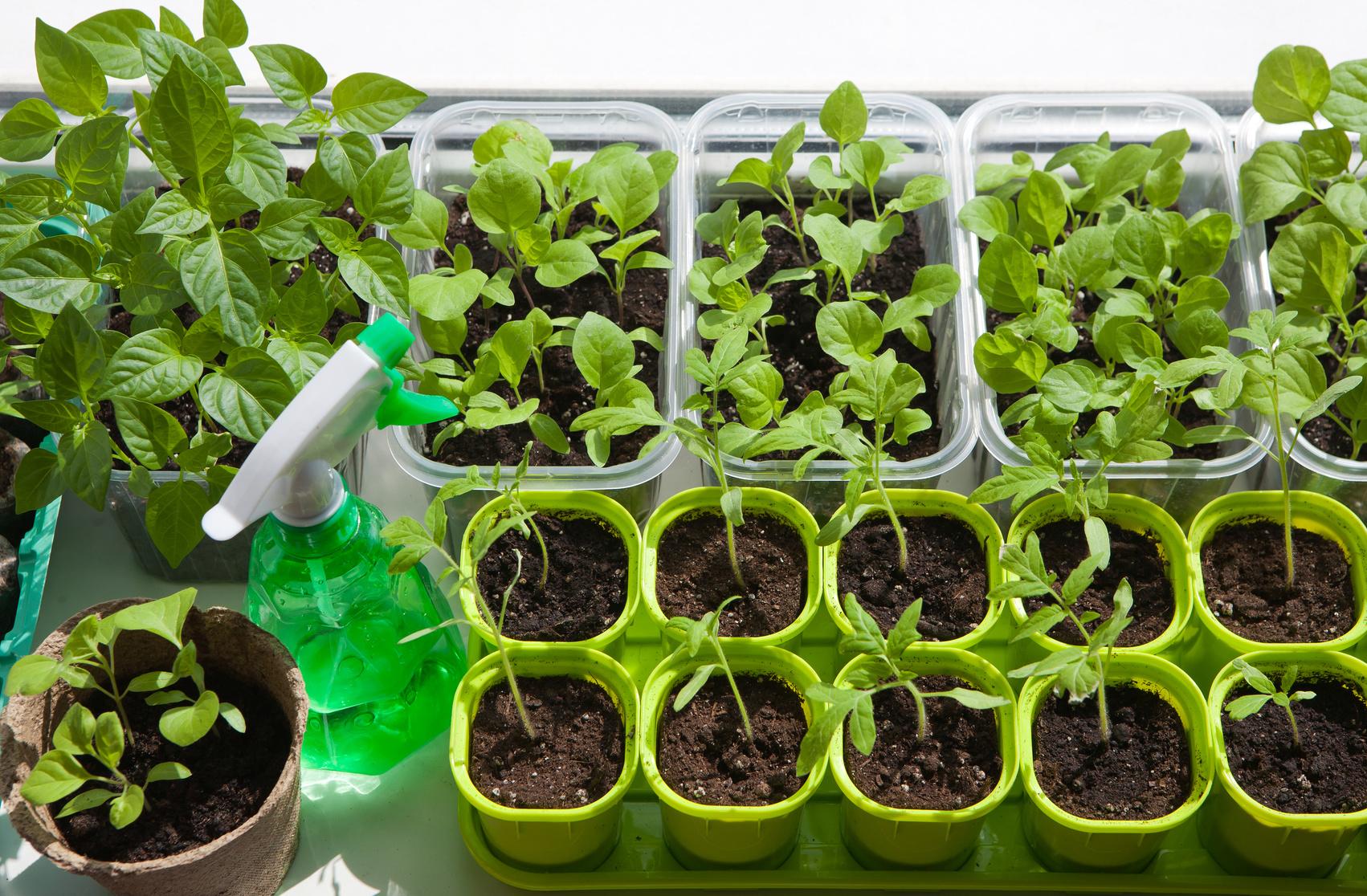 5 ortaggi da seminare a febbraio nel semenzaio for Piantine ortaggi