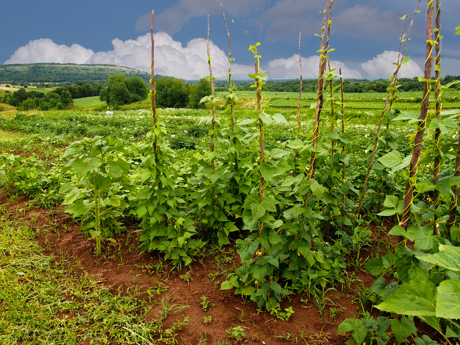 Sostegni Per Pomodori In Vaso i sostegni delle piante: a cosa servono e come posizionarli