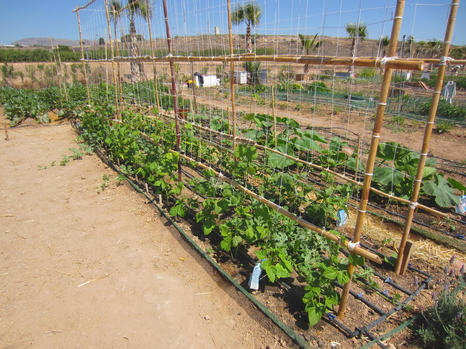 i sostegni delle piante a cosa servono e come posizionarli