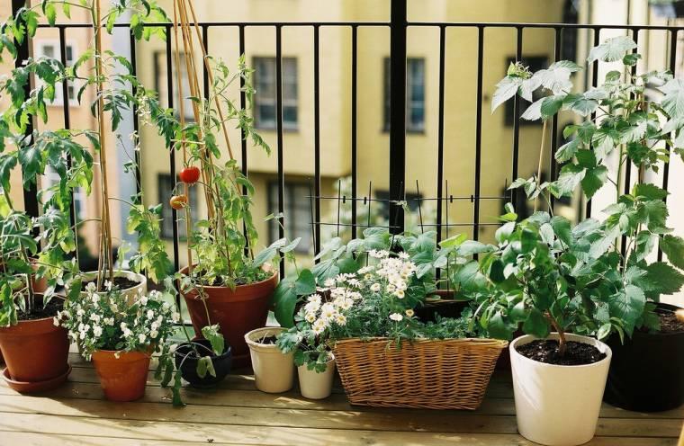 Orti sul balcone e smog: trucchi per un cibo più sicuro