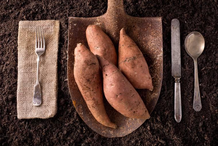 Un Tubero Sorprendente Come Cucinare Le Patate Americane Valfrutta Magazine