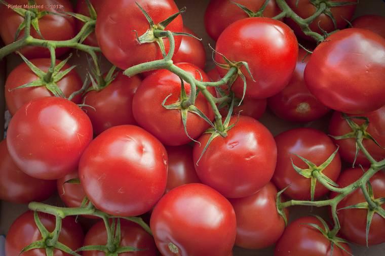 10 Utili Consigli Se Coltivi Il Pomodoro