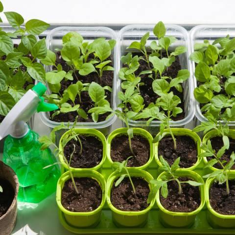 Spinaci bietole e cicoria le propriet degli ortaggi a for Cosa seminare a febbraio